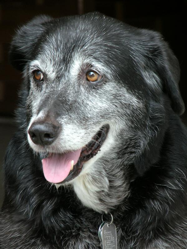 Senior Dog Wellness Service Las Vegas